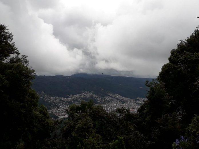 Reforestan con 7 mil arbolitos al Huitepec Los Alcanfores